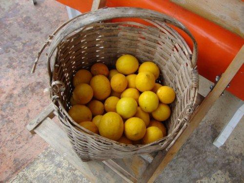 lemonsb