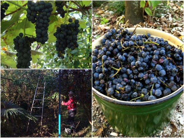 Копия grape